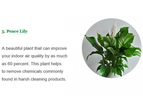 Axis Planter3