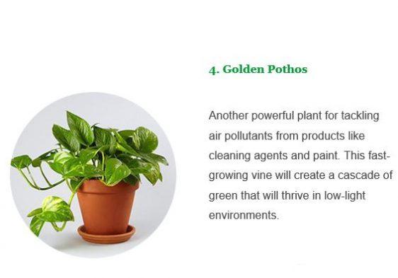 Axis Planter5